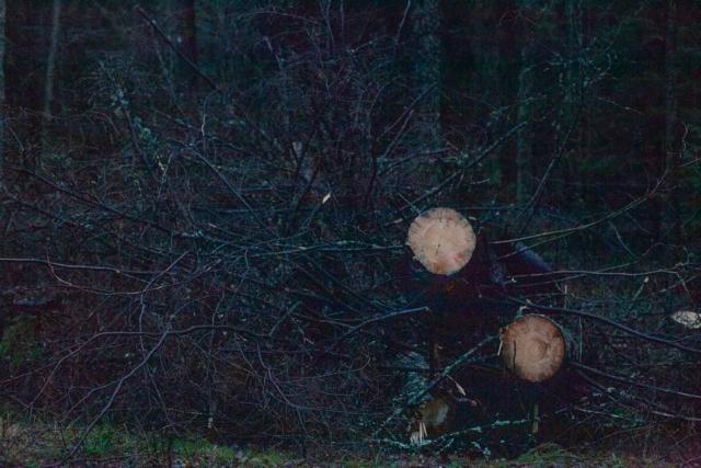 Sadetta, jottei olisi niin valoisaa: päivän pituus 5 tuntia 49 min.  #Talvipäivänseisaus  #ISO6400 #metsä #puu #risuja #wintersolstice #woods #trees #sticks  Lenght of The Day 5 hours 49 minutes.
