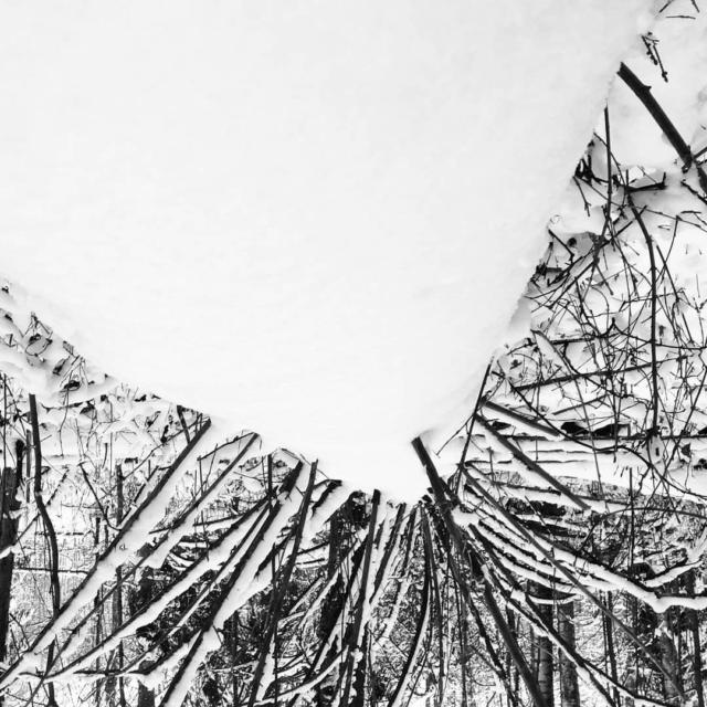 Muistiinpanoja puista ja linnuista. #valokuvapäiväkirja #lumi #talvi #mänty #luonto  Notes about #trees🌳 and #birds I meet.  #photodiary📷  #snapshots  #snow  #winter #outdoors #woods