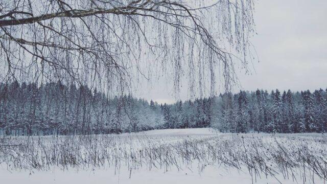 Often wordless.   Happy New Year 2021!  #happihyppy #nastatalla  #landscape #winter #snow #birch #spruce #belowzero #outdoors #snapshot  #phoneography  #Finland  #staysafe